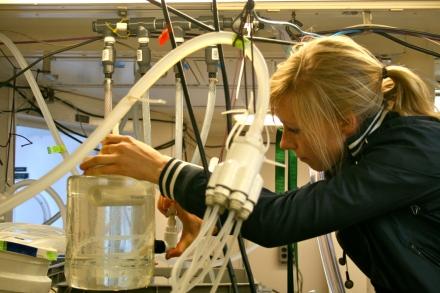 Lisette Mekkes preparing her pteropod experimental set-up. Photo credit: Melissa Ward
