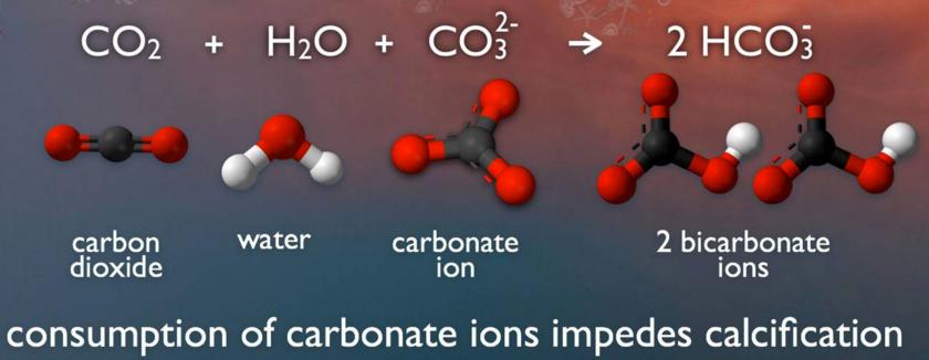 Seawater Carbonate Chemistry. Image: NOAA PMEL
